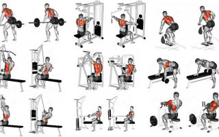 Как правильно качать спину в тренажерном зале (инструкция)