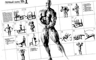 Тренировочные принципы джо вейдера, система строительства тела
