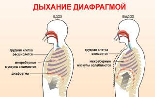 Как правильно дышать животом и грудной клеткой (видео)