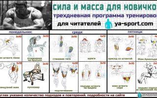 Программа тренировок для начинающих в тренажерном зале