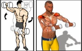 Подъем гантелей перед собой: техника выполнения, какие мышцы работают