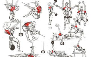 Правила тренировки мышц для бодибилдеров