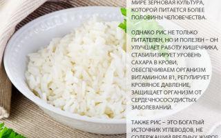 Рис — калорийность, полезные свойства, польза и вред
