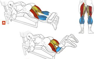 Суперсет на ноги для мужчин: тренировка на сгибание и разгибание ног