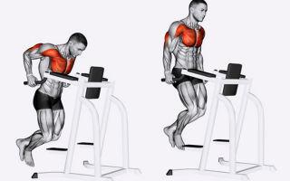 Отжимания на брусьях: для груди и трицепса, работающие мышцы