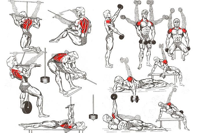 Упражнения для мышц тела картинки
