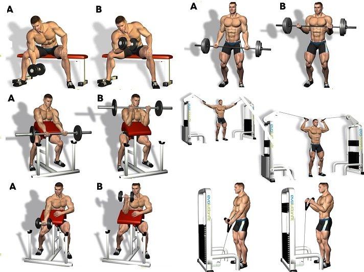 Тренировка рук на массу для мужчин лучшие упражнения