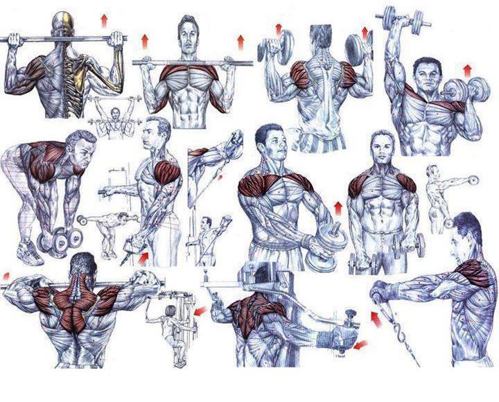 Упражнения и группы мышц в картинках