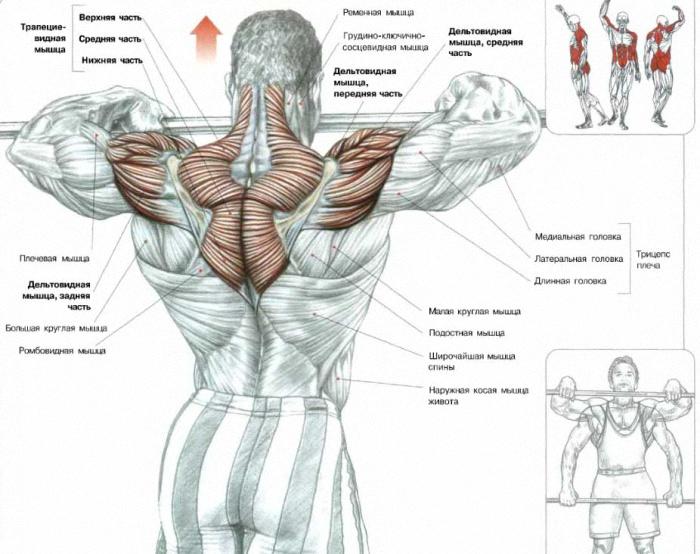 Как накачать все мышцы тела в домашних условиях